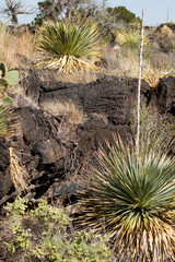 Yucca grows amid a 5,000-year-old ropy lava bed at Valley of Fires NRA in New Mexico