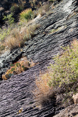 Cacti, Yucca and grasses grow amid a 5,000 year old ropy lava bed at Valley of Fires NRA in New Mexico