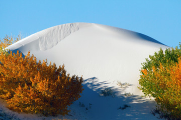 Blue sky and autumn colors in White Sands National Monument in New Mexico