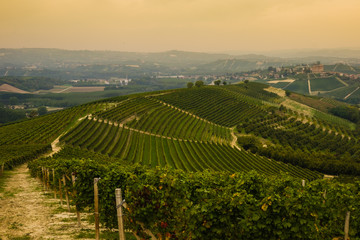 Wall Mural - Langhe hills during harvest at the end of the summer