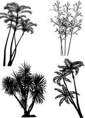 black palm tree silhouettes isolated on white