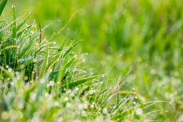 grass on forest glade closeup in sun light