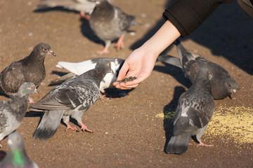Girl feeding flock of pigeons