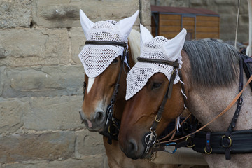 pair of horse pulling carriage in Carcassonne, France