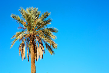 tropical palm in morocco