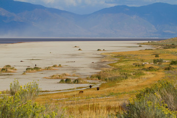 Great Salt Lake, Wasatch Mountains, and three bison on Antelope Island State Park in Utah