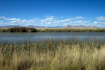 Water, grass, and sky in autumn at Bear River Migratory Bird Refuge in Utah