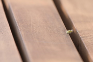 caterpillar on park bench
