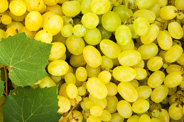 White grape berries (Vitis) background Fototapete