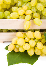 Close view of white table grape (Vitis) clusters