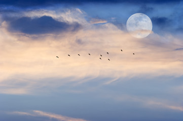 Moon Clouds Skies Birds