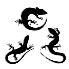 Set of Beautiful monochrome lizard, lizard silhouettes. Salamandra silhouettes. Gecko Silhouettes.