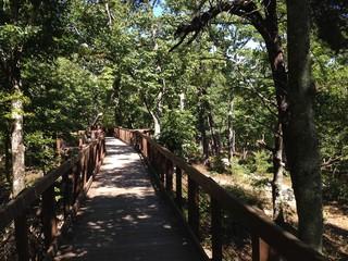 Boardwalk to Bald Rock on Cheaha Mountain, Alabama