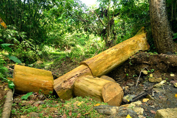 Fallen tree in a forest image