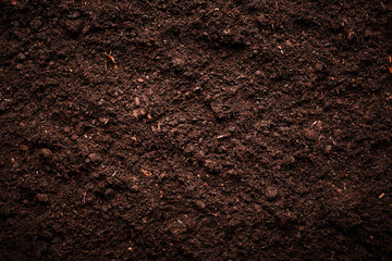 Soil Wall mural