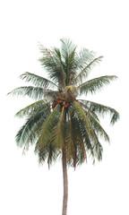 Stock Photo:.coconut tree