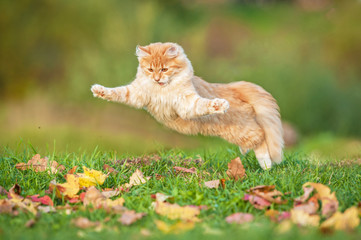 Funny cat playing outdoors in autumn