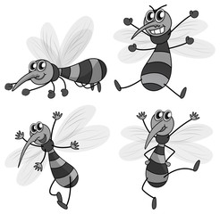 Mosquito in four different poses