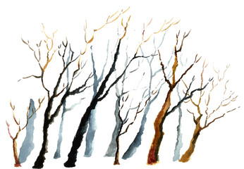 Bare winter branches of the trees.
