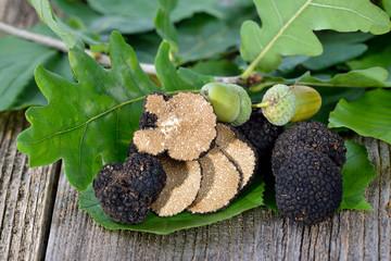 Schwarze Herbsttrüffeln - tuber unicantum - mit Laub der Eiche, Haselnuss und Buche