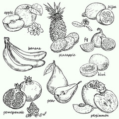Vector collection fruit. Fruit  - vector linear drawing.