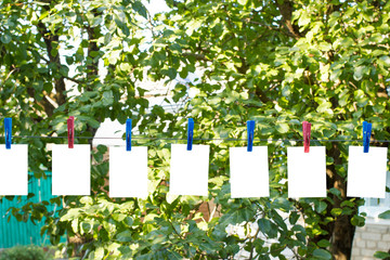 Clothespins on a wire in the yard with white leaves