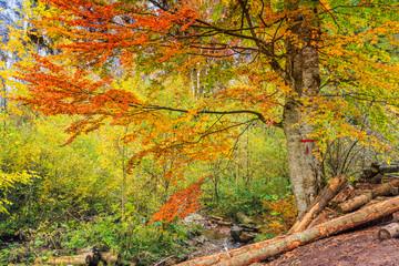 Autumn forest In Romania