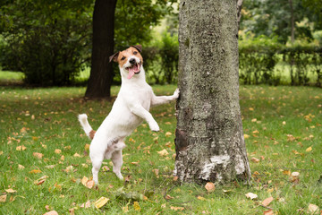 Funny dog at fall park leaning on tree
