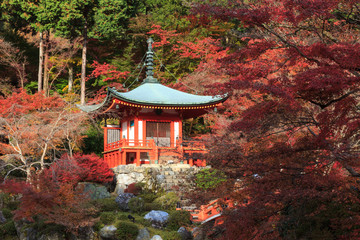 The leave change color of red in Daigoji Temple  japan.