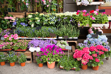 Flowers And Plants Outside Of Shop