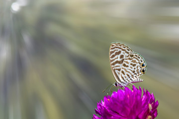 butterfly on flower with sunrays background