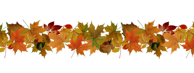 Autumn leaves border - isolated on a white background