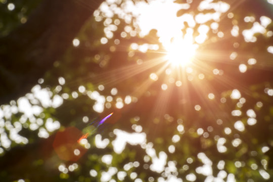 Bokeh leaf with sunlight