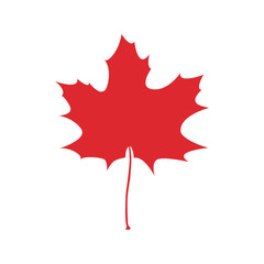 Maple leaf  icon vector illustration