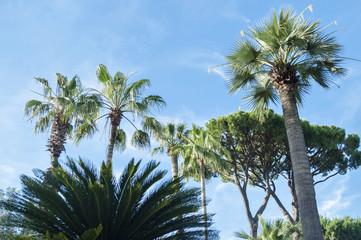 Palme su sfondo blu