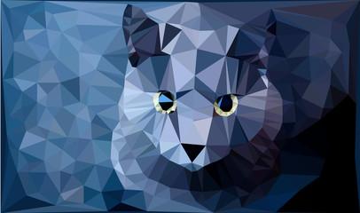 fatto grigio azzurro con sguardo fisso
