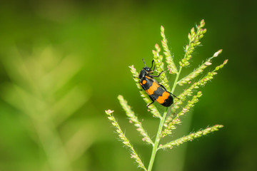 Insects, animals
