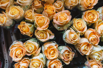 Orange rose Background, Close-Up of many pastel colored roses