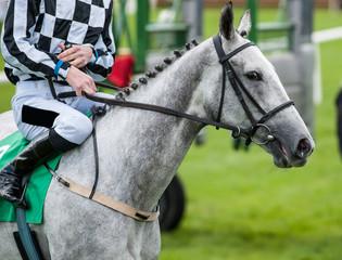 close up of jockey on grey race horse