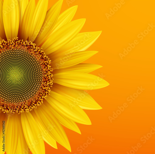 Sunflower Background Yellow Flower Over Orange Autumn