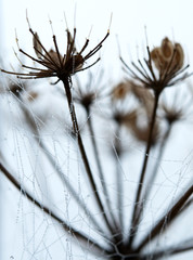 Pflanzenarten