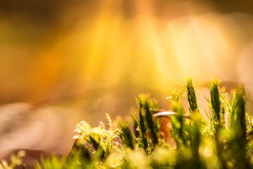 Moos am Waldboden im Sonnenlicht
