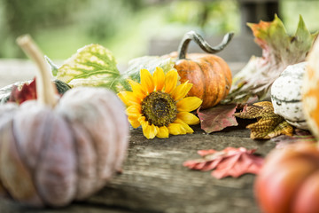 Herbstkarte Kürbisse