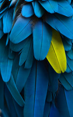 particolare piume di pappagallo