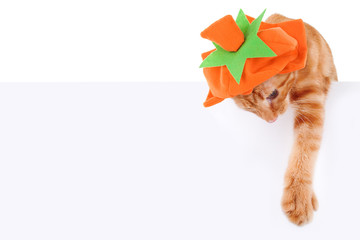 Halloween or Thanksgiving Pumpkin Cat Sign