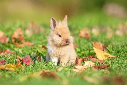 Little rabbit sitting on the lawn with fallen leaves