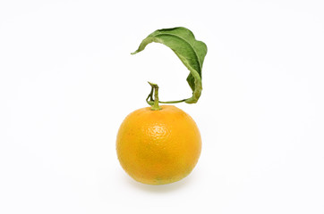A bitter orange on the white background.
