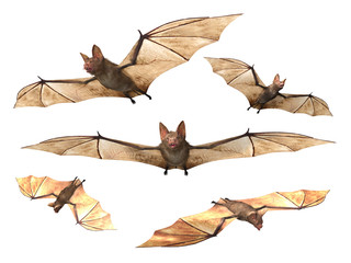 Flying Vampire bats isolated on white background