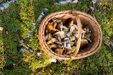 Koszyk pełen grzybów