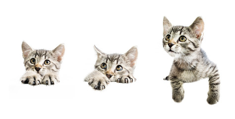 Collection of kittens above white banner